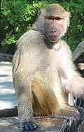 Экскурсия Город мудрых обезьян