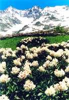 Конное восхождение к подножью горы Чугуш