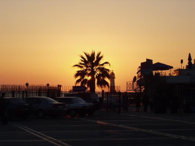 Пальмы в лучах заката